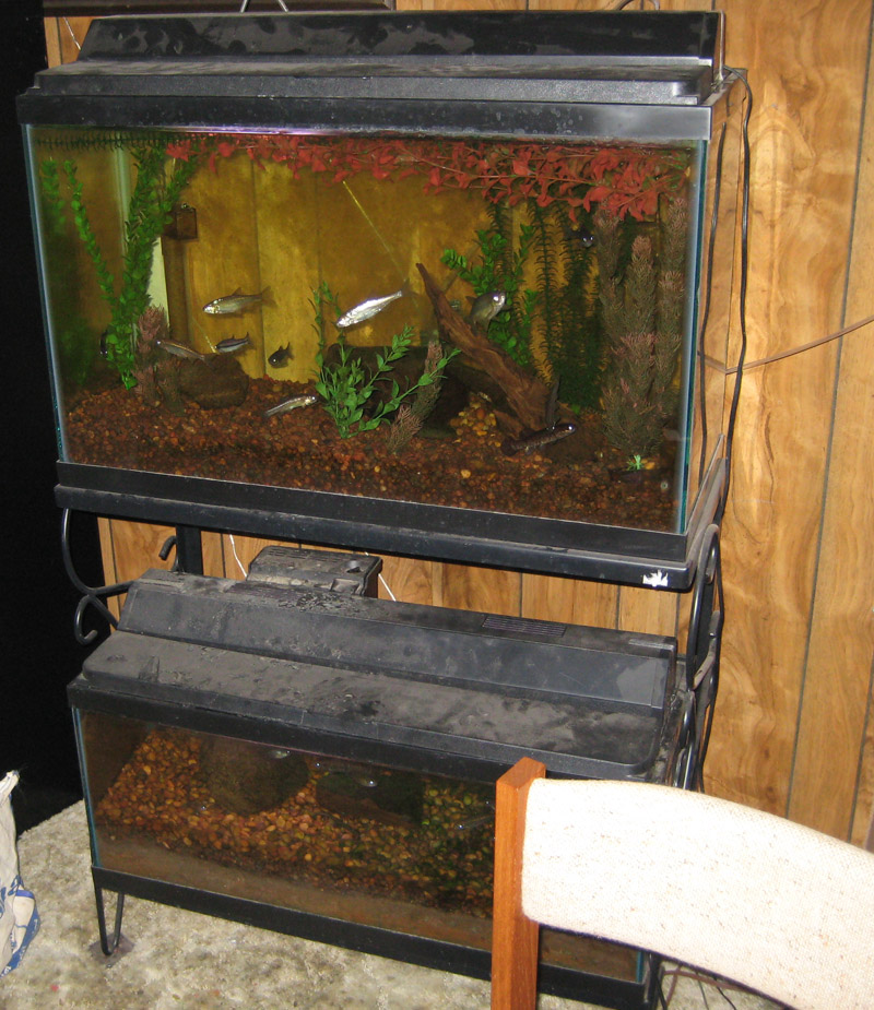 my fish tank Here, in no particular order, are 12 mistakes new goldfish keepers make don't make these mistakes mistake #1: buying a goldfish bowl or very small tank you should never keep goldfish in a bowl goldfish can grow to be over a foot long and need a lot of space to swim around.