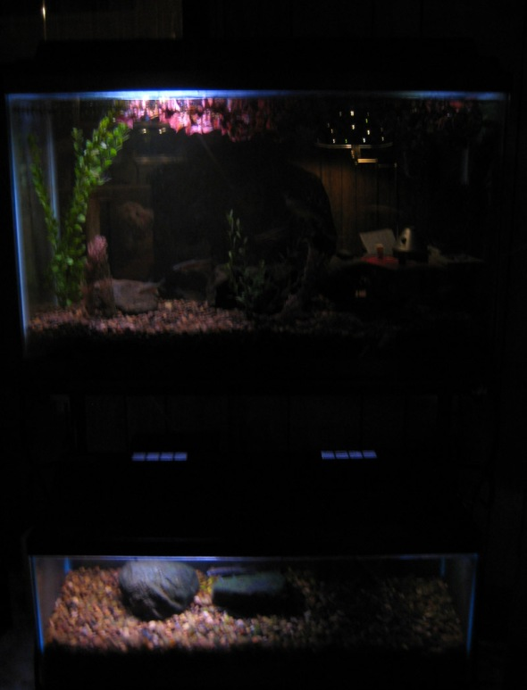 small-aquariums-2-08_01_03-on-the-ice-and-in-the-aquarium-028.jpg