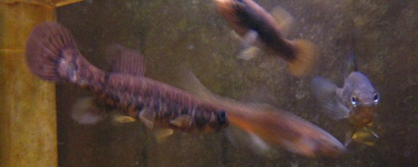 small-mixed-group-08_01_03-on-the-ice-and-in-the-aquarium-040.jpg