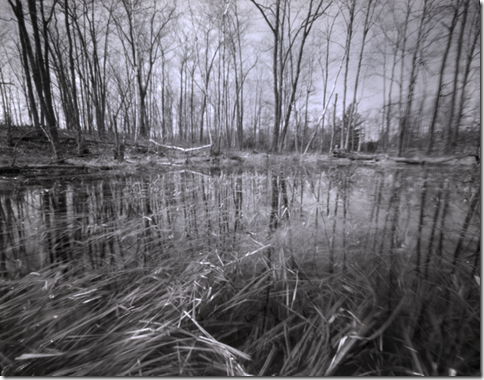 Earl Johnson Pinhole-Trees from Water